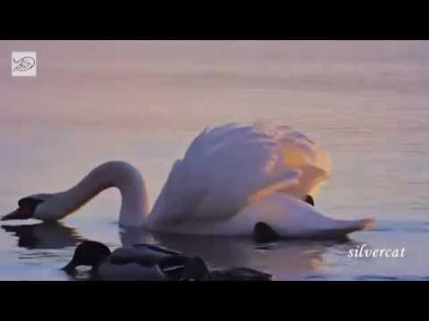 Эдвард Григ-Утро (Edvard Grieg- Morning)