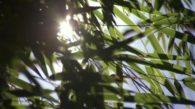 BBC Дикий Китай 2 серия - Шангри-Ла