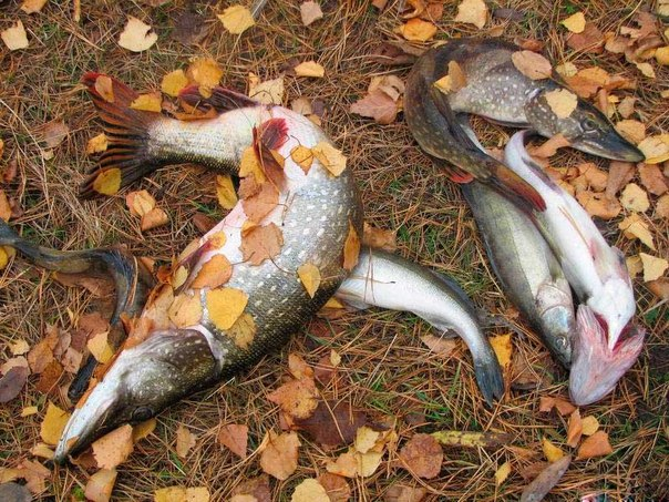 рыба клюет при понижении или повышении давления