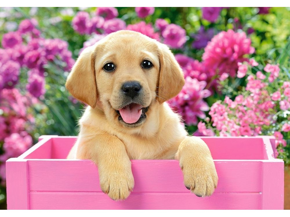Красивые собачки картинки на телефон, спецназ гру