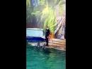 Дельфинария в гостях г Чебоксары 17 03 2018 парк Амазония
