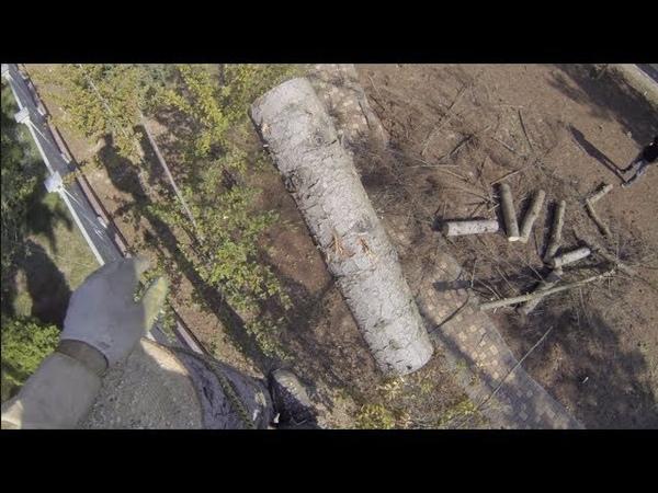 Удаление деревьев-10. Короедные ели в Трувиле.
