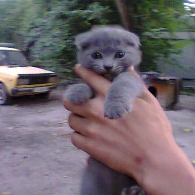 Влад Шпак, 5 июня 1996, Киев, id219671183