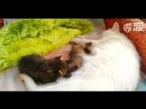 (0+) Мама кошка и енотики