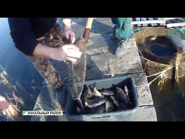 Алтайские рыбаки хотят восстановить популяцию рыбы в озере Уткуль (27.06.18г., Бийское телевидение)