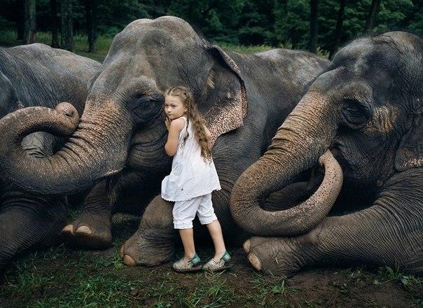Маленькая дочка в мире животных. Арт-проект Amelia's world от Робин Шварц JHGTOQ6ib8U