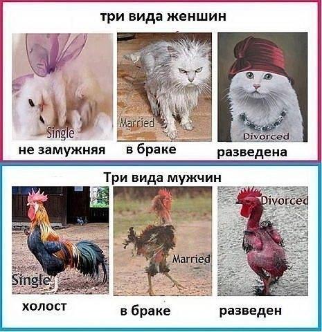 http://cs323316.vk.me/v323316996/82cc/Vjd1pXtPqFU.jpg