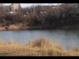 В Макеевку и Донецк прилетали лебеди и аист