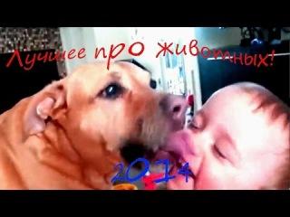 Смешное видео! Приколы про Котов Детей и Собак Футболистов! Лучшая подборка видео 2014