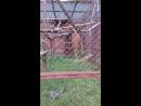 Веселые лемуры в зоопарке Перми