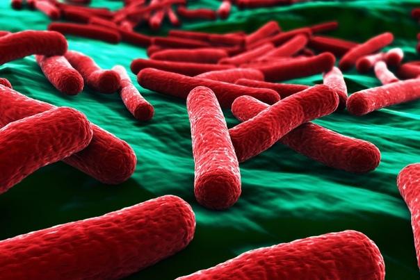 Ученые взломали ДНК кишечной палочки создав искусственную форму жизни