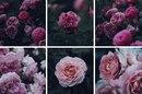 Рвите розы, пока не поздно.