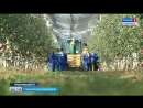 Владимир Путин и Дмитрий Медведев познакомились с суперинтенсивными садами на Ставрополье Автор Шамиль Байтоков