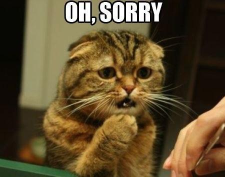 Кот фото прости меня