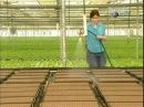 Выращивание растений с помощью гидропоники