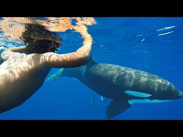 GoPro - Arc Mayotte - Episode 01 - Orca