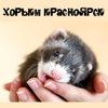 Хорьки Красноярск