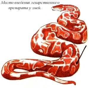preparati-ot-parazitov-u-cherepahi