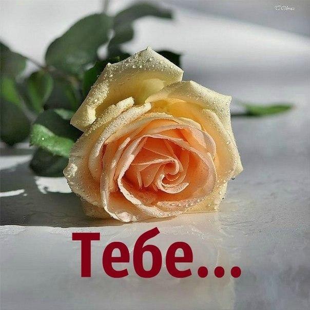 http://cs7055.vk.me/c7008/v7008662/25639/wfIx_Jd_e0M.jpg