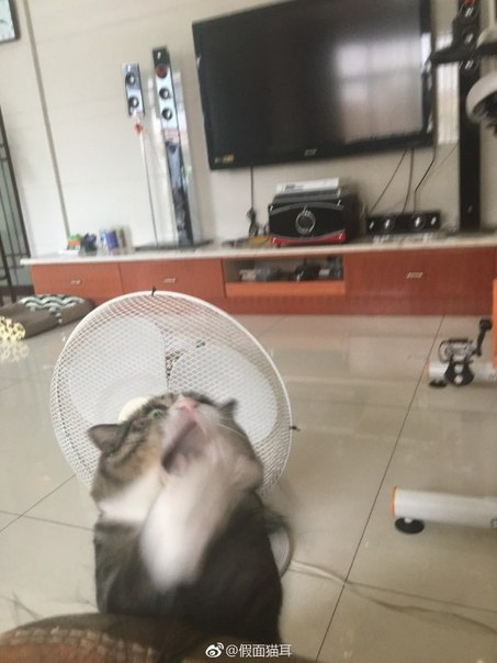 Просто немного эмоциональный кот