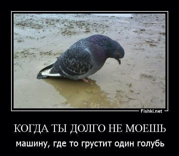да часто грустят голуби о моей машинке