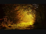 Valefim planet - Morning forest - (Chillout)
