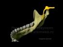 Мандибулярная анестезия.Введение