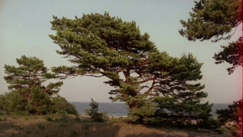 6. Bergmans video - Alienation