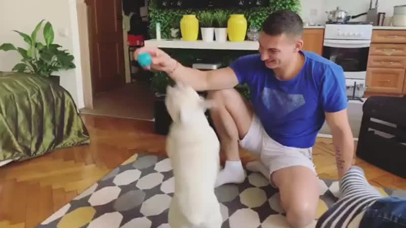 борьба за мяч 😜😜😊французскийбульдог
