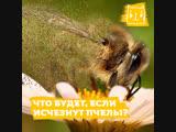 Что будет, если исчезнут пчелы?