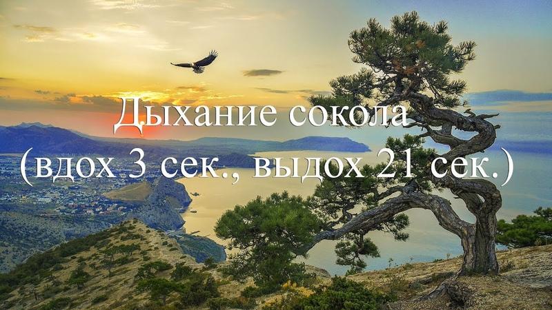 Дыхание сокола (вдох 3 сек., выдох 21 сек.)