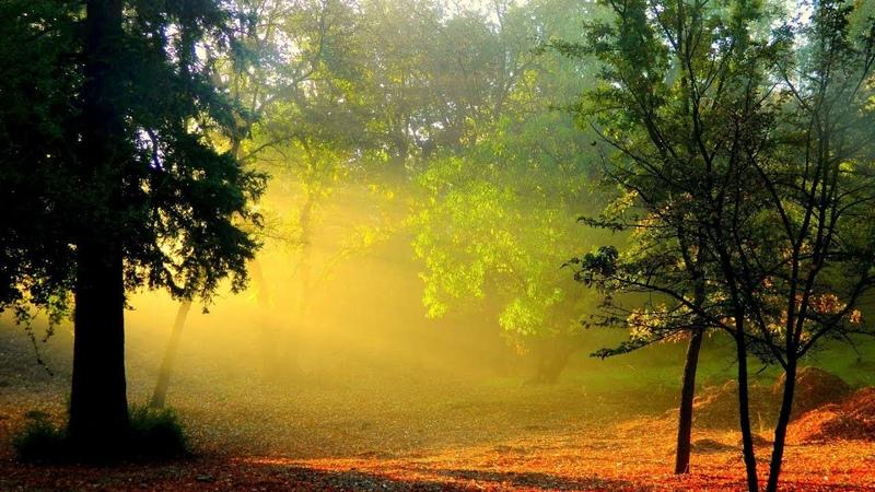 Магический лес: волшебная музыка для положительных изменений в вашей жизни.