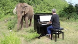 Man Plays Piano For Blind Elephants