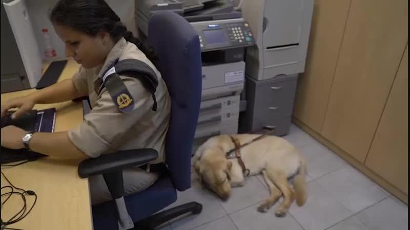 В Израиле собака-поводырь помогает офицеру исполнять служебные обязанности