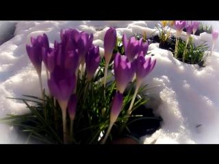 Ф. Шопен Ноктюрн Op 9 No 2 - Весна... - F. Chopin Nocturne Op 9 No 2