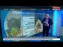 Россия 24 - В Буэнос-Айресе задержаны 8 полицейских из-за пропажи 540 килограммов марихуаны - Россия 24