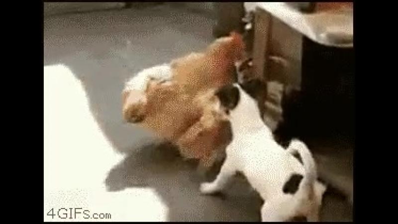 бессовестный щенок