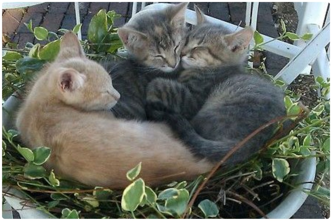 Безопасные комнатные растения для кошек