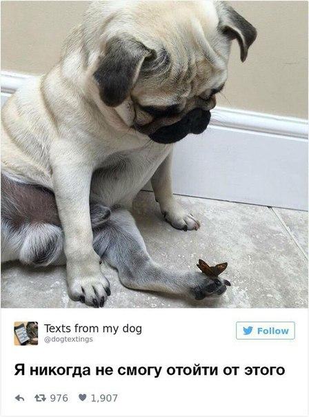 Ну и как можно не любить собак?