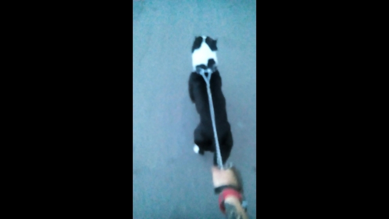 прогулка с любимым псом которого давно не видел