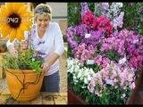Какими однолетними цветами лучше украсить ваш сад? Секреты Садовода. Дача ТВ