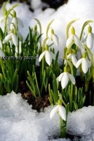 весна пришла!!!!!!!