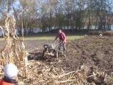 Уборка кукурузы при помощи мотоблока