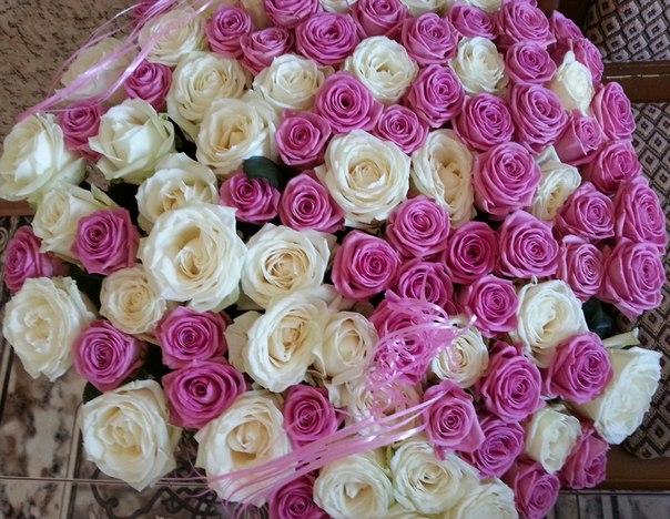 101 роза в длине 60 см