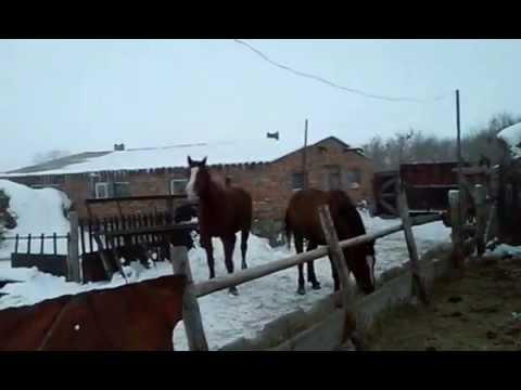 лошади на откорме