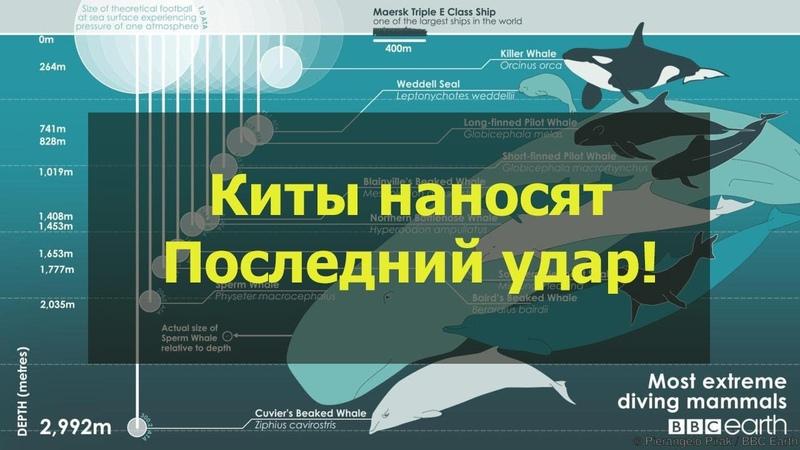 Финальная манипуляция Китов перед ростом