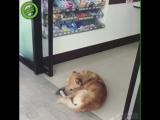 Собака - на всех наплевака