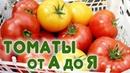 Секреты выращивания помидоров. Томаты от А до Я!