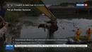 Новости на Россия 24 • Добро пожаловать в ад: Олимпиада в Рио обрастает скандалами