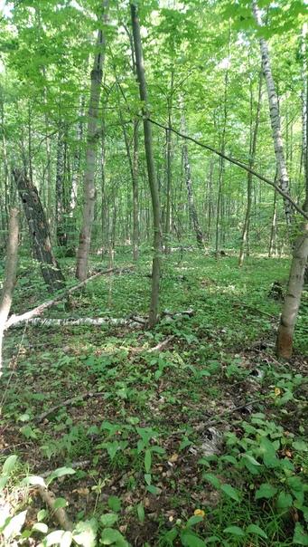 Упавшие деревья гнут и ломают соседей, чтобы прогнить и дать жизнь короедам.